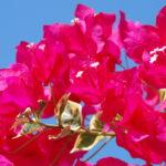 flowers_big